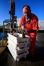 UK CORNWALL NEWLYN 10JUN08 - Cornish handline fisherman Mark Payne lands his catch at Newlyn harbour in Cornwall, western England...jre/Photo by Jiri Rezac / WWF UK..© Jiri Rezac 2008..Contact: +44 (0) 7050 110 417.Mobile:  +44 (0) 7801 337 683.Office:  +44 (0) 20 8968 9635..Email:   jiri@jirirezac.com.Web:    www.jirirezac.com..© All images Jiri Rezac 2008 - All rights reserved.
