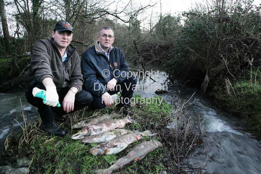 5/1/2005.Concerned fisherman Frank Doheny and Fianna Fail TD John McGuinness pictured with some dead salmon which Frank found at the mouth of the Pocock river where it meets the river Nore..Picture Dylan Vaughan