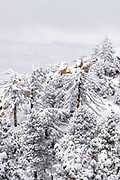 Snow dusted pines and rocks in the San Bernardino Mountains, San Bernardino National Forest, California USA