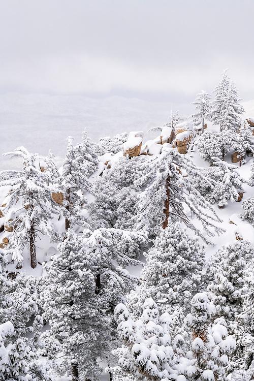 Snow dusted pines and rocks in the San Bernardino Mountains, San Bernardino National Forest, California USA