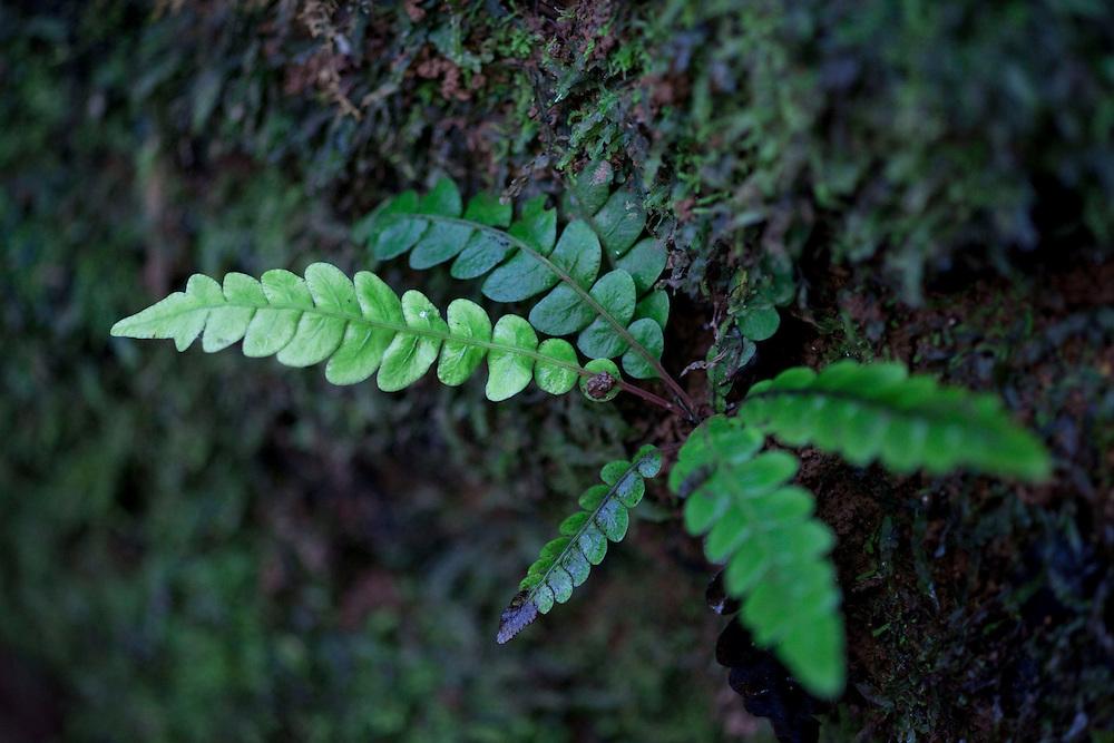 Nova Lima_MG, Brasil.<br /> <br /> Estacao Ecologica de Fechos em Nova Lima, Minas Gerais.<br /> <br /> Fechos Ecological Station in Nova Lima, Minas Gerais.<br /> <br /> Foto: JOAO MARCOS ROSA / NITRO