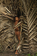 Huaorani Indian woman, Bebanca Wane cutting fire wood while carrying a baby on her back.<br /> Bameno Community. Yasuni National Park.<br /> Amazon rainforest, ECUADOR.  South America<br /> This Indian tribe were basically uncontacted until 1956 when missionaries from the Summer Institute of Linguistics made contact with them. However there are still some groups from the tribe that remain uncontacted.  They are known as the Tagaeri & Taromenane. Traditionally these Indians were very hostile and killed many people who tried to enter into their territory. Their territory is in the Yasuni National Park which is now also being exploited for oil.