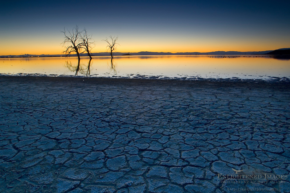 Dry cracked mud shoreline and barren trees in evening light at the Salton Sea, Imperial Valley, California