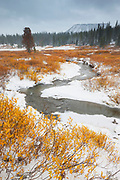 Golden fall color lines the snow-covered banks of Blackrock Creek after the first autumn snowfall in Teton County, Wyoming. Grouse Mountain, a 6,884-foot (2,098-meter) peaks is visible through the storm clouds on the horizon.
