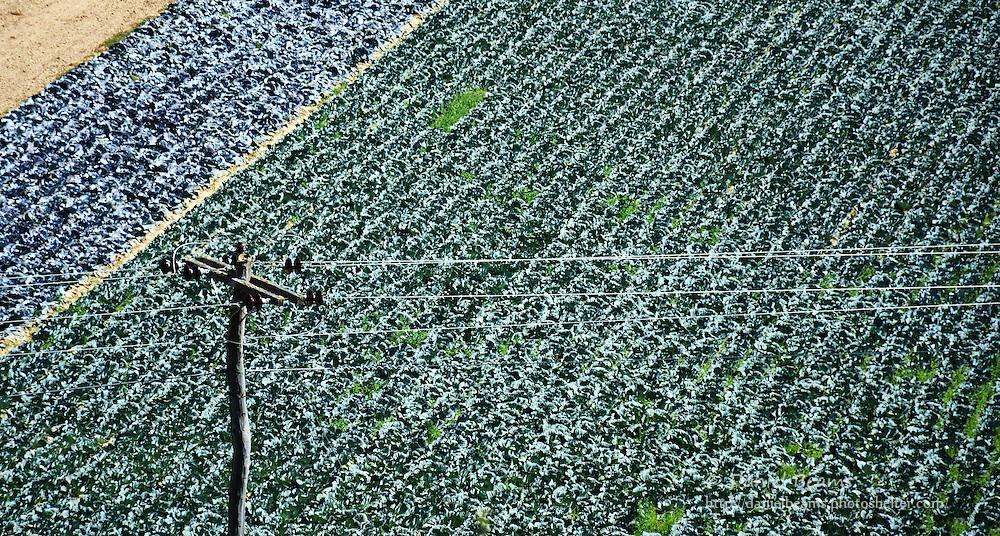 Agriculture in Los Valles, Santa Cruz, Bolivia