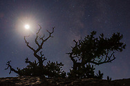 Moon and stars over trees at night on the North Rim of the Grand Canyon, Grand Canyon National Park, Arizona