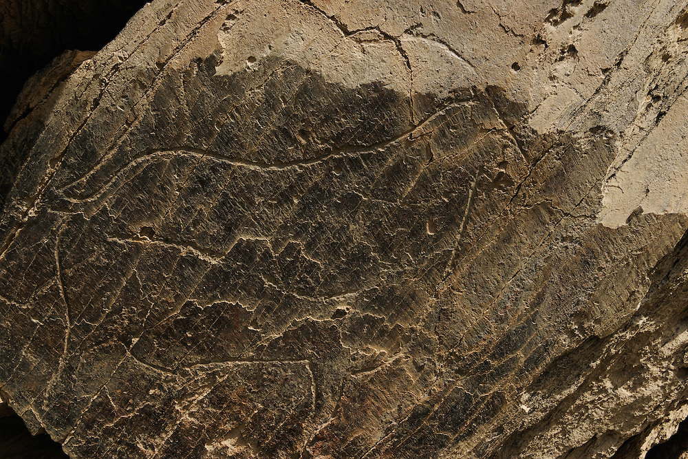 Rock carvings, Iberian Ibex, Capra pyrenaica, C&ocirc;a valley Archaeological park,<br /> Portugal