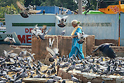 An old woman walking next to a large group of birds in Old Delhi, India 2013