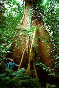 MEXICO AND GUATEMALA Giant Ciba tree at Piedras Negras; near Usumacinta River along the border of Mexico and Guatemala