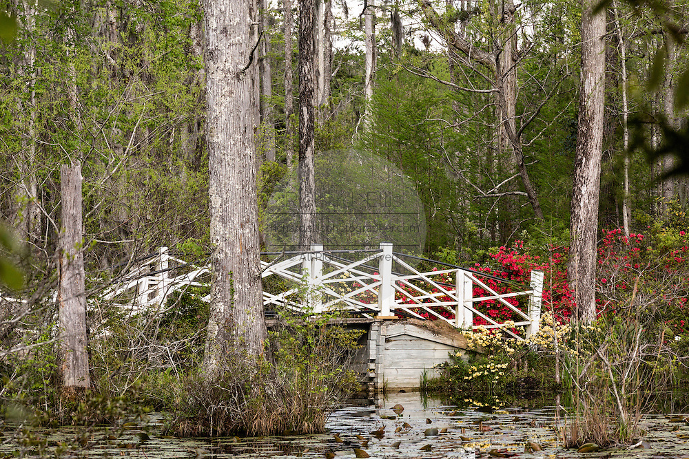 Foot bridge across the blackwater bald cypress and tupelo swamp during spring at Cypress Garden April 9, 2014 in Moncks Corner, South Carolina.