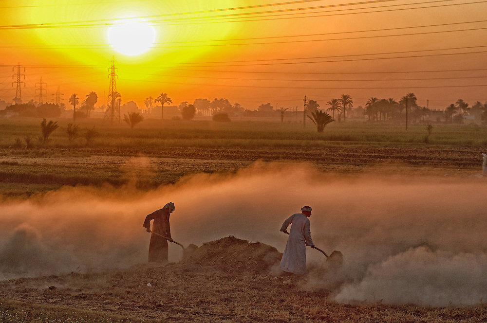 Men working in the fields at sunrise,West Bank, Thebes West, Luxor, Egypt