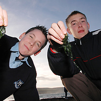 20/12/2005<br />Lisdoonvarna Community School students Kevin Walsh and Christy Storer, working on their Young Scientist of The Year Project, 'Seaweed'.<br />Picture. Cathal Noonan/Press22.
