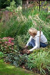 Planting Buddleja × alternifolia Unique syn. 'Pmoore12' in a gap in a border in autumn