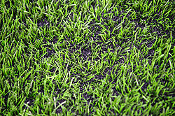 The new rubber crumb Artificial Turf at Allianz Park can be seen in detail - Photo mandatory by-line: Rogan Thomson/JMP - Tel: Mobile: 07966 386802 16/02/2013 - SPORT - RUGBY - Allianz Park - Barnet. Saracens v Exeter Chiefs - Aviva Premiership. This is the first Premiership match at Saracens new home ground, Allianz Park, and the first time Premiership Rugby has been played on an artificial turf pitch.
