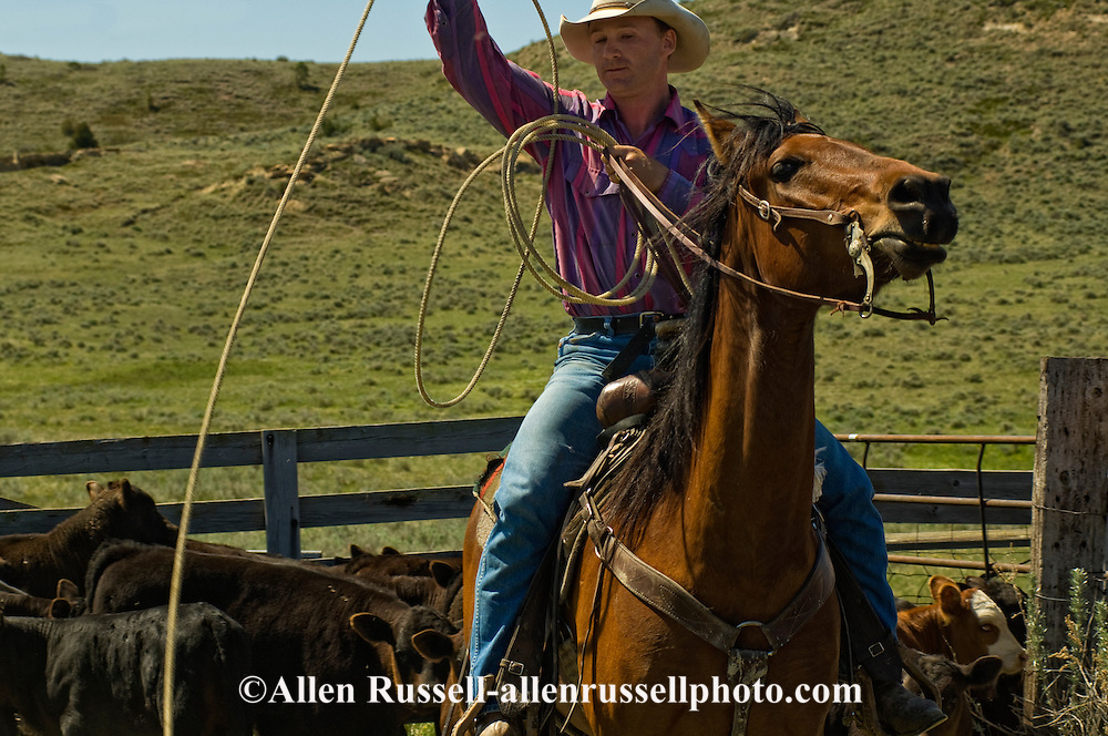 Cowboy, Rancher, Ty Linger drags calves to fire at branding, east of Miles City, Montana