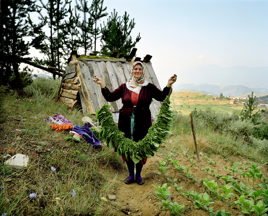 A lady - who grows tobbaco in the fields above Ribnovo - holds up a string of tobacco.