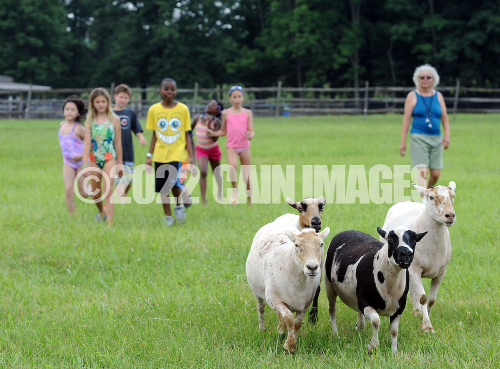 CORRECTS HERD: HILLTOWN, PA - JULY 12:  Children learn to herd sheep during a Fresh Air Fund picnic at the home of former Fresh Air Fund child Nancy Ortiz and her husband, Dave Sharp July 12, 2014 in Hilltown, Pennsylvania. They have been holding a picnic in honor of the children for more than 30 years. (Photo by William Thomas Cain/Cain Images)