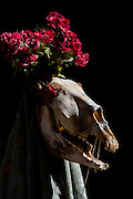 Often in these masked tradtitions, several props are used to enhance the frightening effect of the masks, in this case with a skull from an animal, with a bizarre crown of red roses.