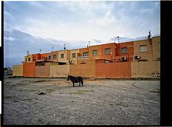 Campohermoso,Almeria,Andalucia  Spain<br /> A pony outside the village.<br /> &copy;Carmen Secanella
