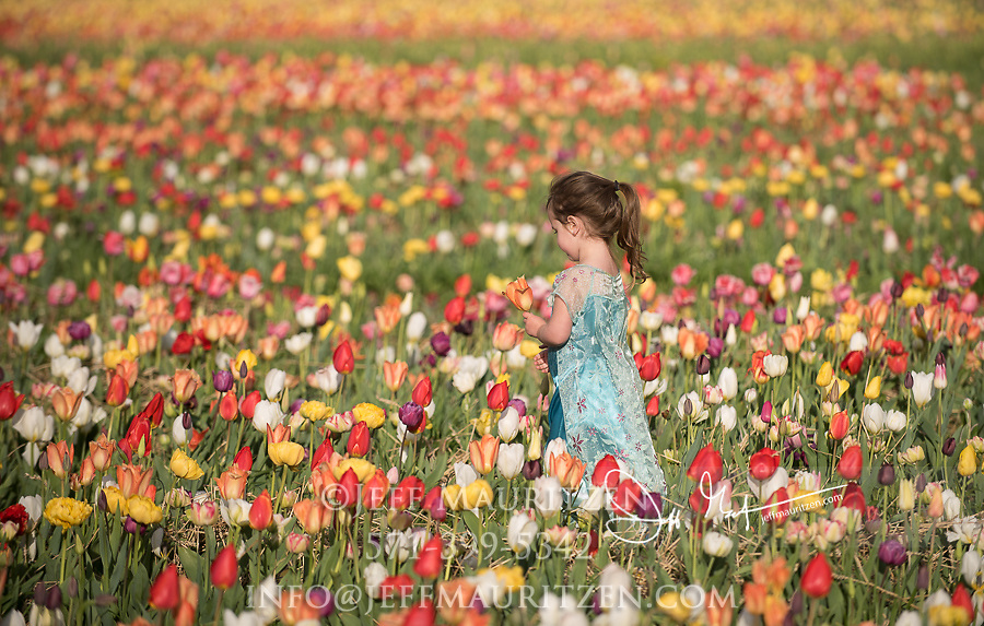 A little girl walks through a field of coloful tulips while carrying a basket.