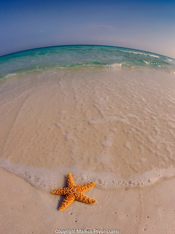 Gulf Island National Seashore<br /> Santa Rosa Island, Florida<br /> Maresa Pryor
