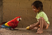Amerindian Girl with Scarlet Macaw (Ara macao) CAPTIVE<br /> Apoteri<br /> Rupununi<br /> GUYANA<br /> South America