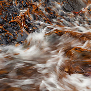 Seaweed moved by the waves over the dark stones