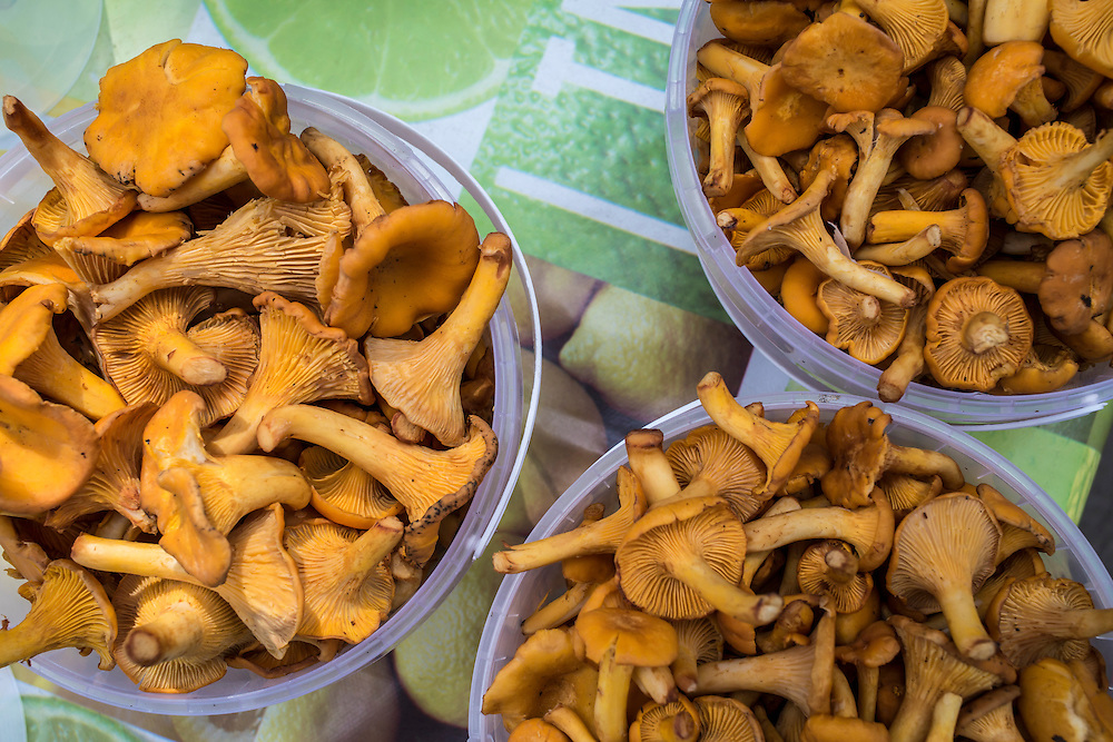 """Chanterelle mushrooms, known in Russia as """"little foxes,"""" are sold along the roadside on Sunday, August 18, 2013 near Potapovo, Russia."""