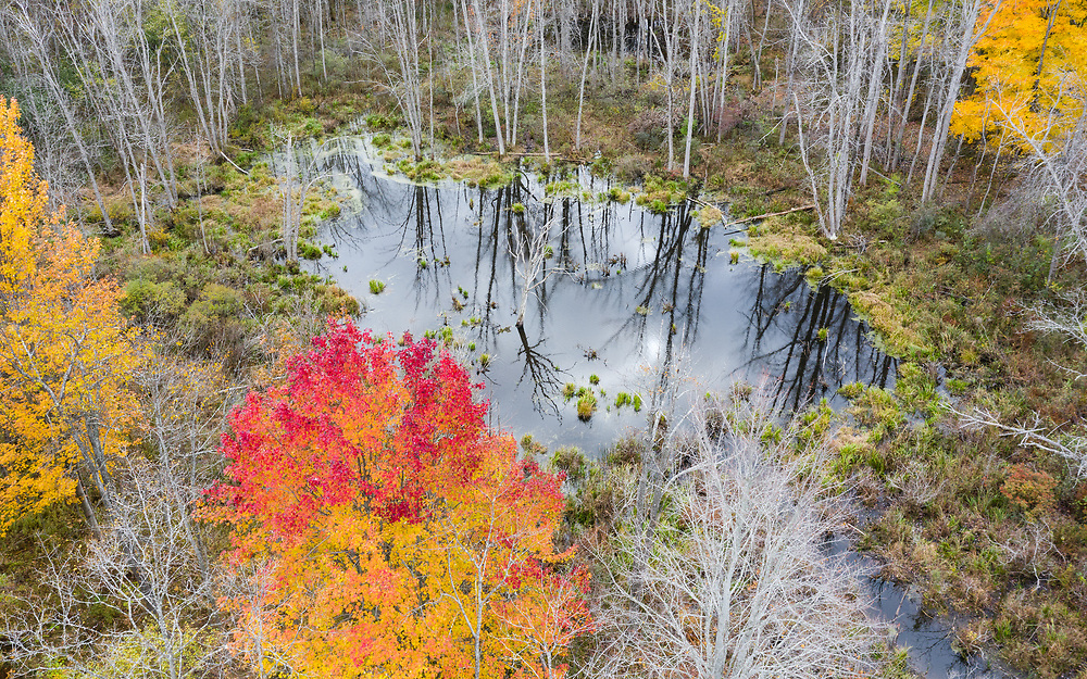 https://Duncan.co/small-pond-with-dead-tree-and-fall-color