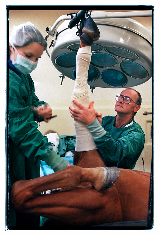 961024:ALISTER MACLEAN AND ASSISTANT OPERATING ON A RACE HORSES KNEE AT MELB UNI VET CLINIC IN WERRIBEE:PIC CRAIG SILLITOE:NEWS melbourne photographers, commercial photographers, industrial photographers, corporate photographer, architectural photographers, This photograph can be used for non commercial uses with attribution. Credit: Craig Sillitoe Photography / http://www.csillitoe.com<br />
