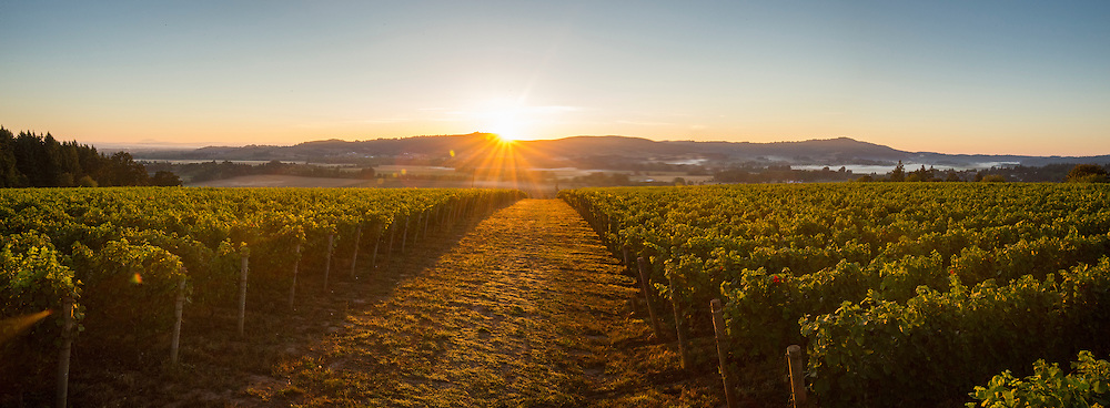 Patton Valley Vineyards, Willamette Valley, Oregon