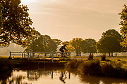 UNITED KINGDOM, Richmond Park: 14 May 2019 <br /> An early morning cyclist makes his way through Richmond Park this morning as the sun rises on another fine day of weather across The UK. Temperatures are set to reach 19C in the capital and potentially higher in the Midlands.