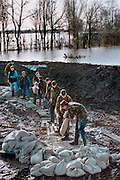 Nederland, Middelaar, 28-2-1995<br /> Tijdens historisch hoge waterstand van Maas en Waal<br /> versterken militairen en burgers een nooddijk langs de Maas met zandzakken. Hoogwater, watersnood<br /> Foto: Flip Franssen/Hollandse Hoogte