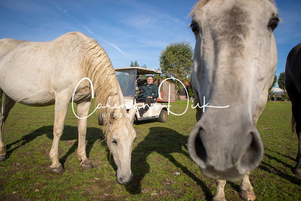 Frans Van der Burg, fokker, , Allstar B<br /> Stal Van der Burg - Berkel En Rodenrijs 2018<br /> © Hippo Foto - Dirk Caremans<br /> 29/09/2018