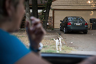 Maeleska Fletes calls to a dog on the street in Dallas, Texas on August 6, 2016. (Cooper Neill for The New York Times)