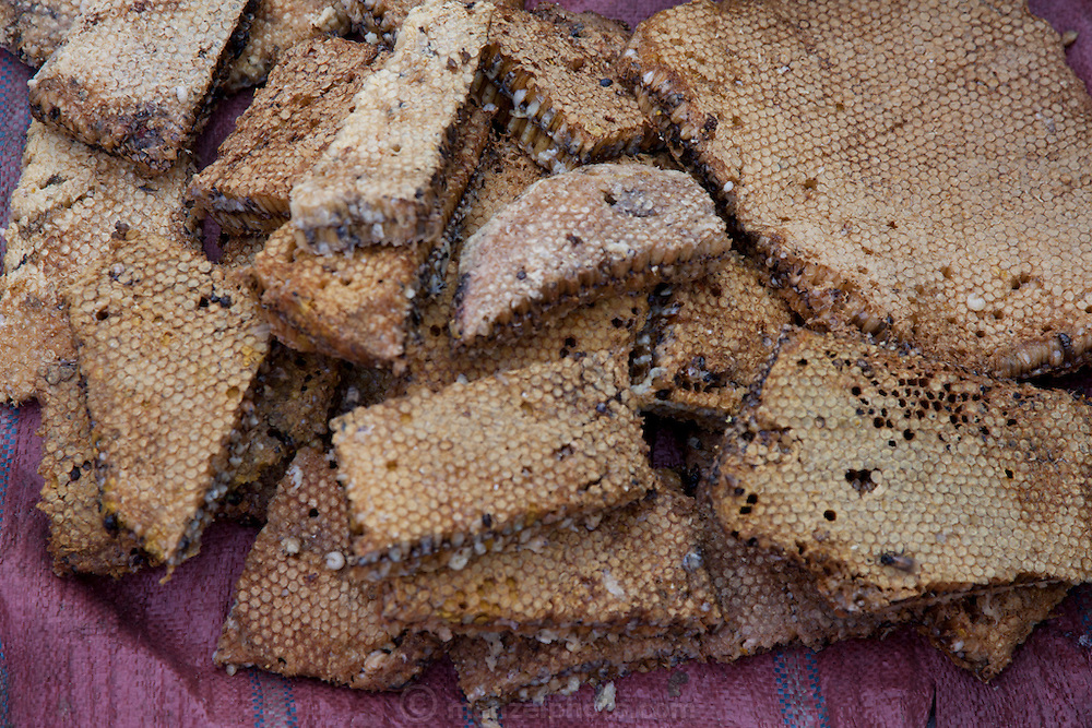 Luang Prabang, Laos. Morning food market. Honey combs with bee larvae.