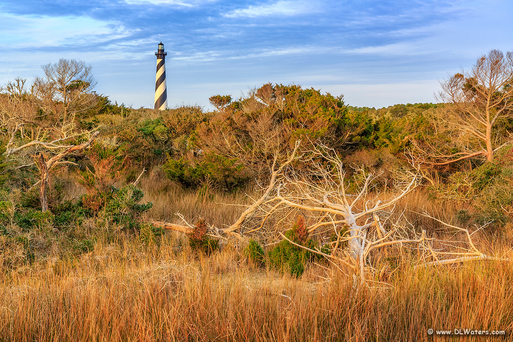 Cape Hatteras Lighthouse  seen from the trail to the beach on a winter morning.