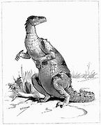 Reconstruction of Iguanadon, large herbivorous dinosaur, sketched from model on show at the Natural History Museum, London . From 'The Illustrated London News' (London 1895). Engraving.