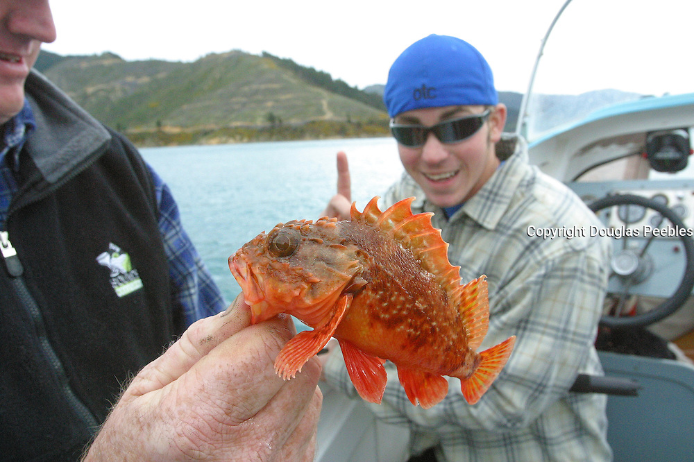 Fishing, Marlborough Sounds, South Island, New Zealand<br />