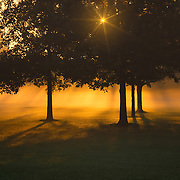 &quot;Golden Burst of Morning&quot;<br />