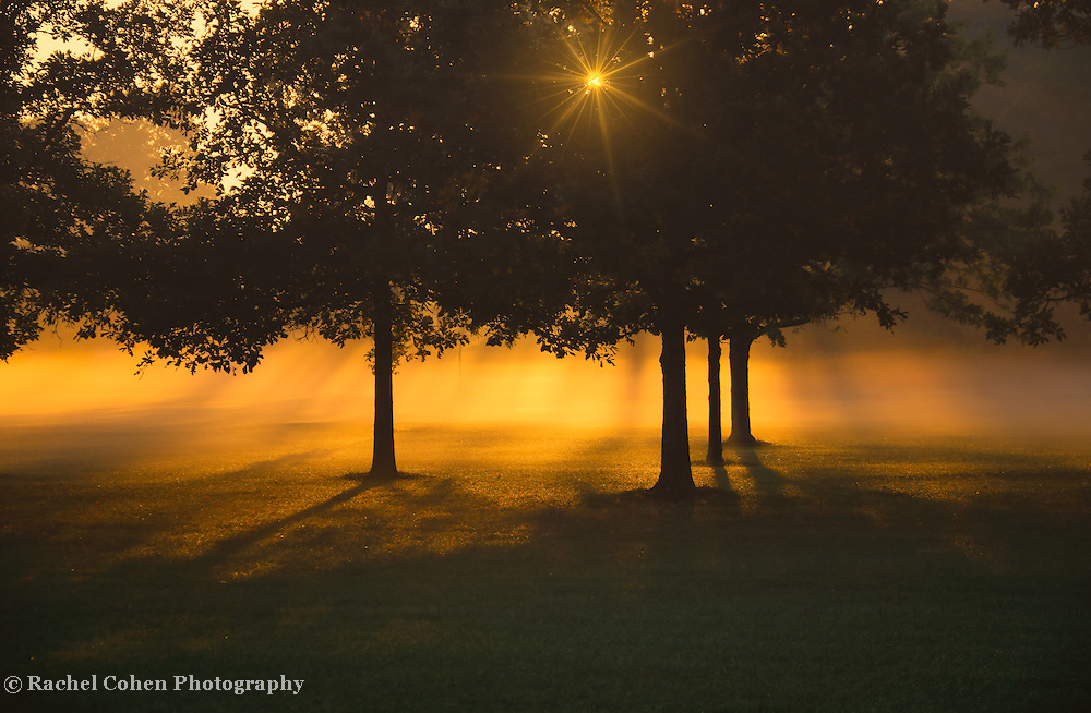 """Golden Burst of Morning""<br />