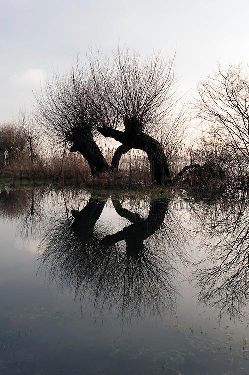 Bomen in uiterwaarden