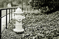 Fire hydrant in park - BW