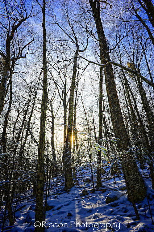 woods in snow at dusk, blue sky