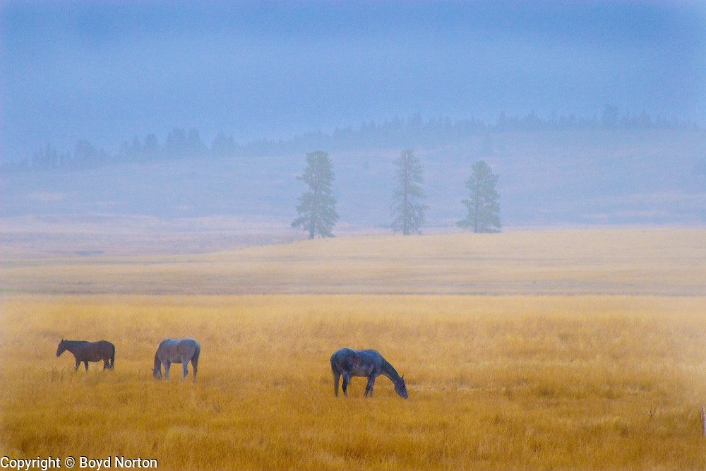 Horses at a Montana ranch