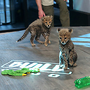 BUILD Presents Boone Smith & Cheetah Cubs
