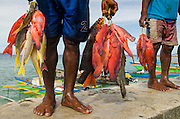 Local fish catch (mostly reef fish)<br /> Biak Island<br /> West Papua<br /> Indonesia