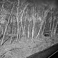 ND Track side trees<br />