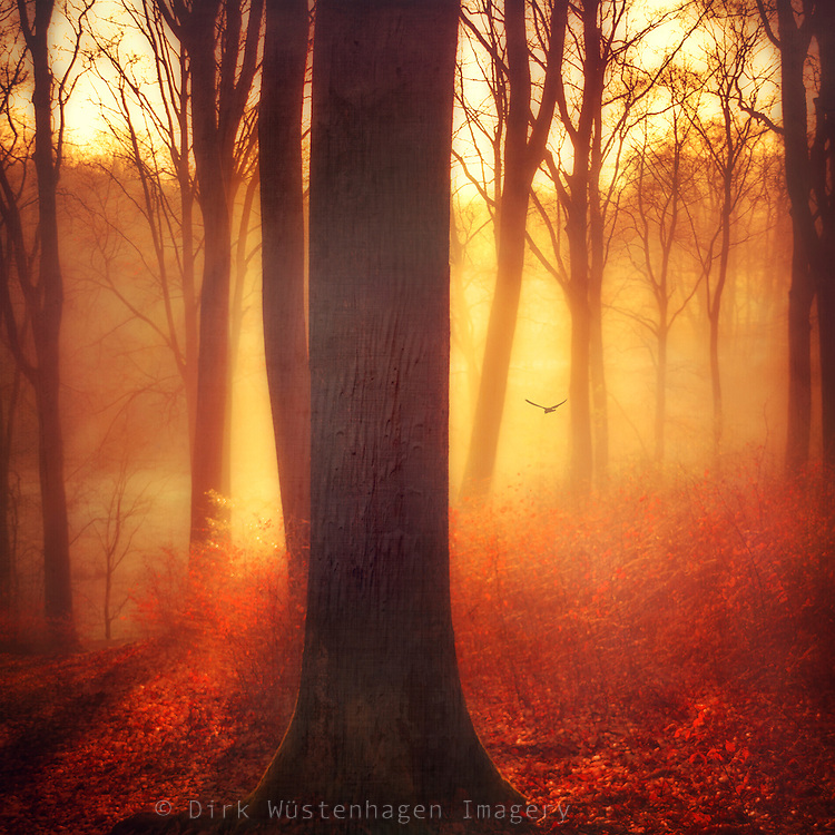 Sunrise in a beech tree forest on a cold misty winter morning - texturized photograph<br />