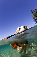 Underwater image of dog swimming in Lake Tahoe, CA